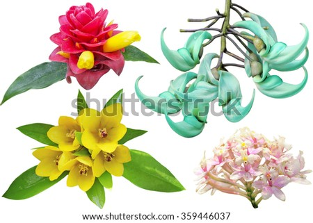Collection of tropical flowers isolated on white background - stock photo