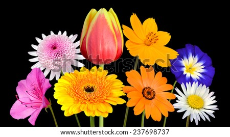 Collection of Various Colorful Flowers with Green Stick Isolated on Black Background. Vibrant Red, Blue, Pink, Purple, Yellow White, and Orange Colors. Bunch of wildflowers - stock photo