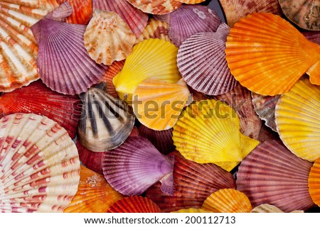 collection of various colorful seashells on black  background - stock photo