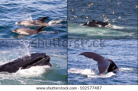 Collection of whale watching pictures in New England - stock photo