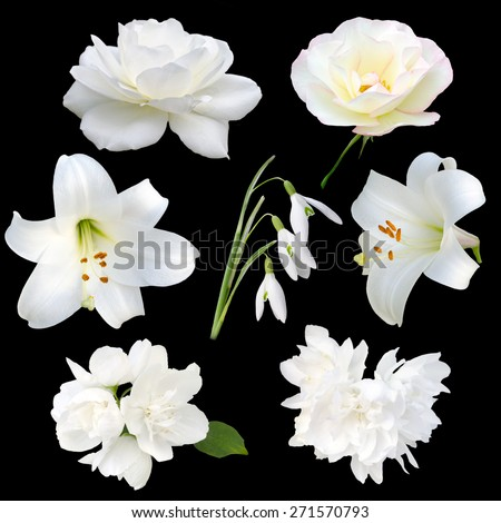 Collection of white flowers isolated on black background - stock photo