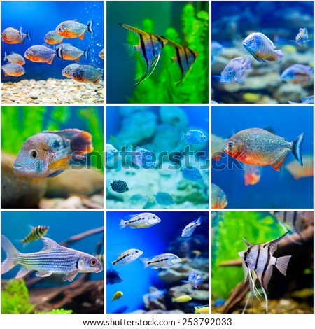 collection  photos from  saltwater world in aquarium - stock photo