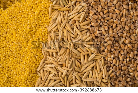 Collection Set of Cereal Grains: Wheat, Barley, Oat, Corn, Millet, Rice, Buckwheat, closeup - stock photo