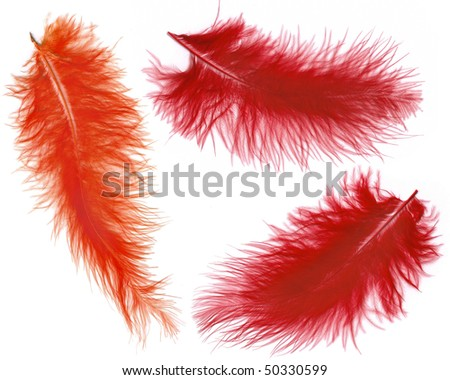 Collection set of colorful feathers  isolated on white background - stock photo