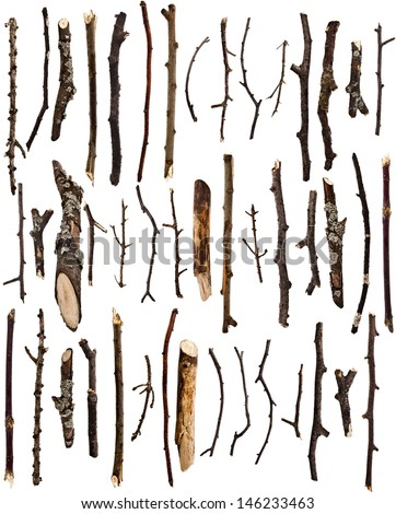 Collection set of dry tree branches  isolated on a white background  - stock photo