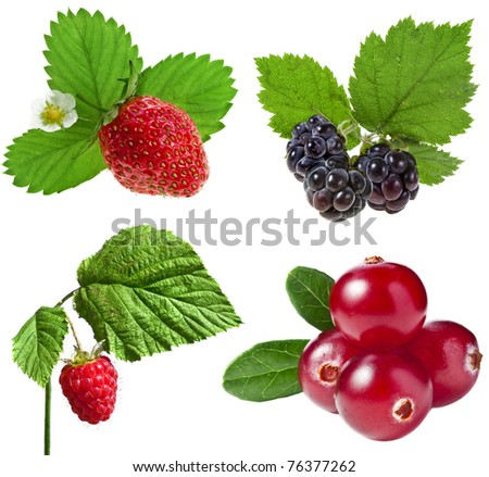 collection  set of forest berries isolated on a white - stock photo
