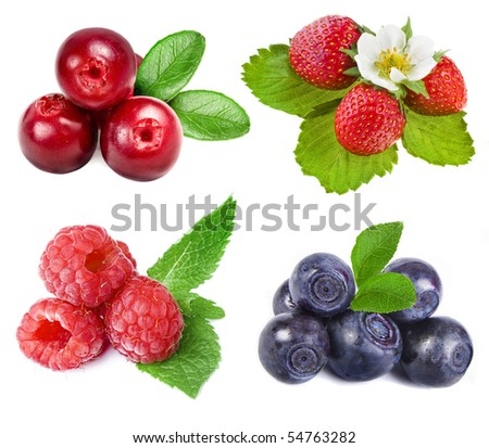 collection set of forest whole berries closeup macro isolated on a white background - stock photo