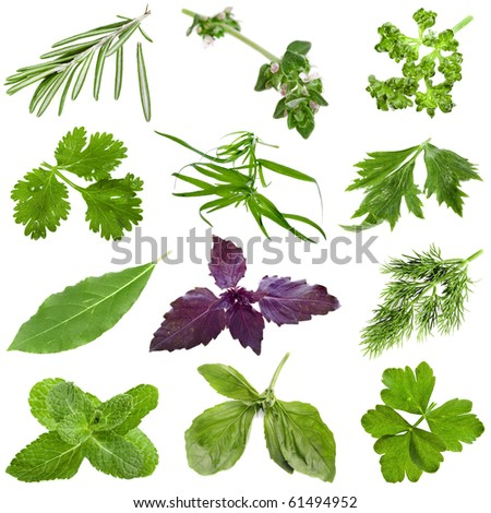 Collection set of fresh herbs isolated on white background - stock photo