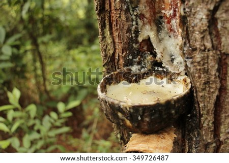 collection the wood resin - stock photo
