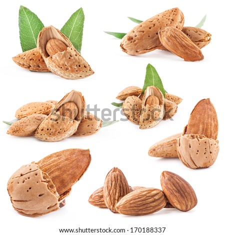 Collections of almond nuts with leaves. Isolated on white background - stock photo