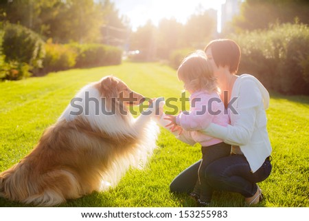 collie dog gives paw mistress - stock photo