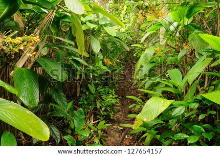 Colombia, wild Darien jungle of the Caribbean sea near Capurgana resort and Panama border. Central America, Mud footpath through jungle - stock photo