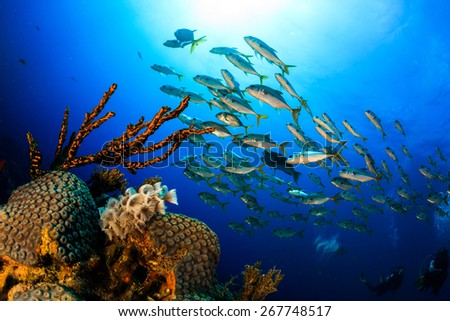 Colony Feather Dusters on hard coral with schooling jacks fish in background, Grand Bahama, Bahamas - stock photo