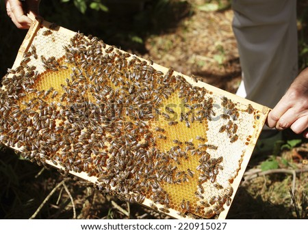 Colony of bees with a honeycomb full of honey - stock photo
