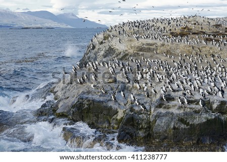 Colony of King Cormorants and Sea Lions on Ilha dos Passaros located on the Beagle Channel, Tierra Del Fuego, Argentina - stock photo