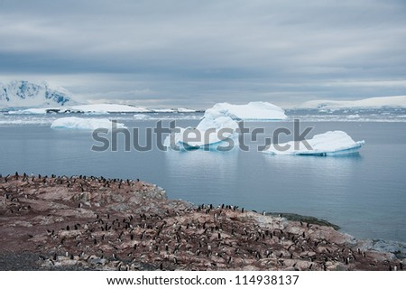 Colony of penguins and huge icebergs, view from the beach - stock photo