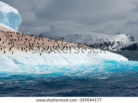 Colony of penguins on iceberg washed by blue water, with mountain in the background, South Sandwich Islands, Antarctica  - stock photo