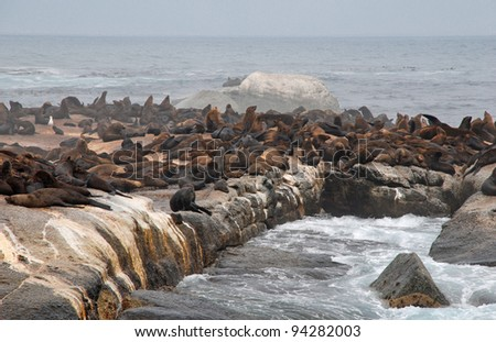 colony of wild fur seals on the rock in Atlantic ocean(South Africa) - stock photo