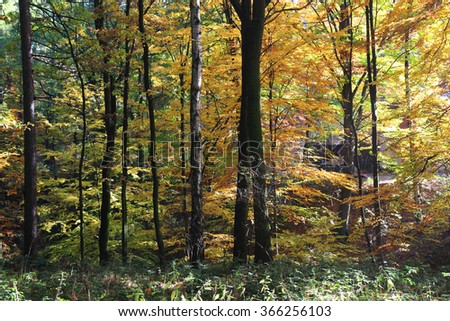 color autumn forest as nice natural background - stock photo