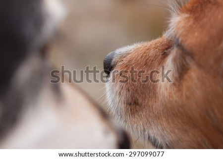 color close up of two dogs muzzles  - stock photo