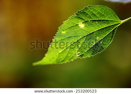 Color close up shot of a green leaf - stock photo