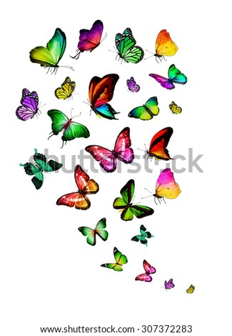 Color different butterflies - stock photo