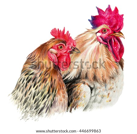 Color drawing with watercolor pencils. Hen and cock on white background - stock photo