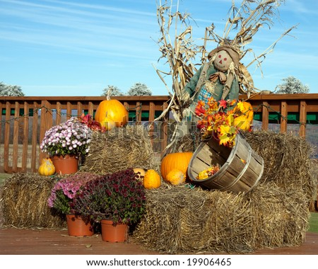 Color DSLR image of Halloween holiday and harvest decorations, including scarecrow, pumpkins, corn, mums on hay bales in the fall. Horizontal with copy space for text. - stock photo