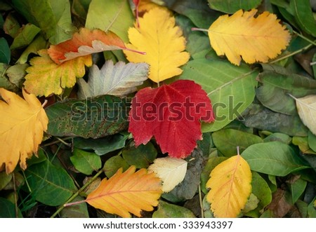 color fall leaves - stock photo