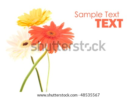 Color flowers - stock photo