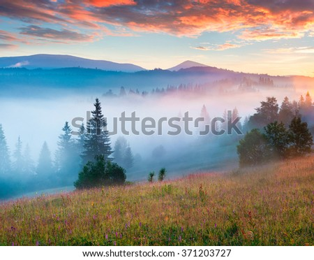 Color foggy sunrise on a meadow with fresh grass glowing first sunlight.Carpathian mountains, Ukraine, Europe. - stock photo