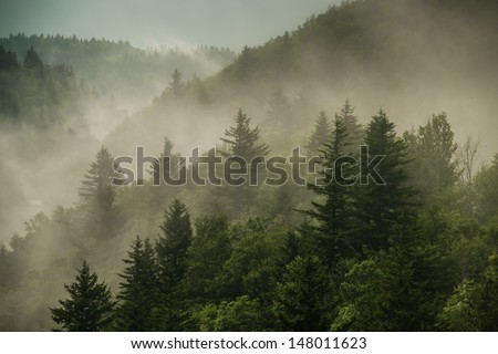 Color image of the clouds flowing through the pine trees along the Blue Ridge Parkway in Western North Carolina. - stock photo