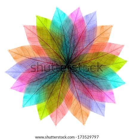 Color leaves abstract shape on white background. - stock photo