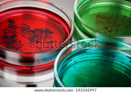 color liquid in petri dishes on grey background - stock photo