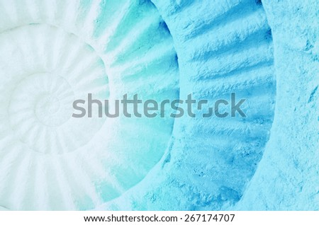 Color of ammonite prehistoric fossil, abstract background. - stock photo