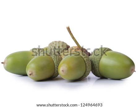 Color photo of green acorns with oak - stock photo