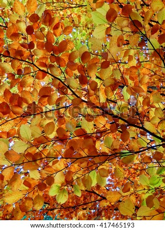 Color Photography of Autumn Beech Tree Detail. - stock photo