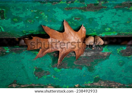 Color picture of acorn under a bench in a park - stock photo