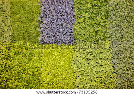 Color plant background. Young herbs. - stock photo