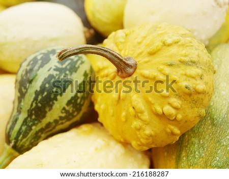 color pumpkins - stock photo
