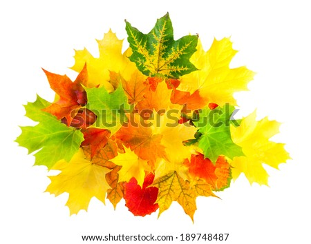 colored autumn leaves isolated on a white background - stock photo
