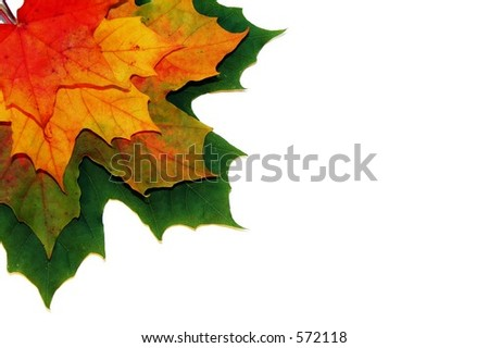 Colored leaves on a white background - stock photo