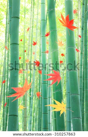 Colored leaves, wind, bamboo - stock photo