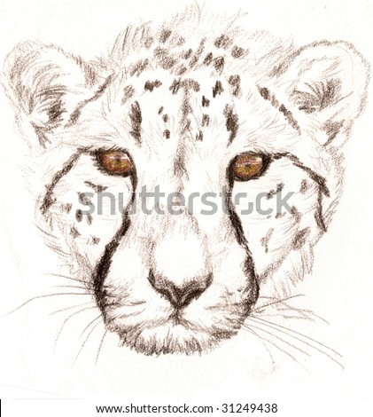 Colored Pencil Sketch of a Cheetah. Done by Ashlee Pearson - stock photo