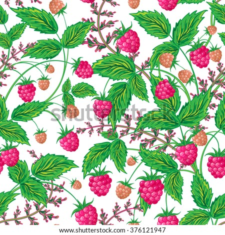 Colored raspberries seamless pattern. Seamless pattern with colored hand draw graphic raspberries.  illustration. - stock photo