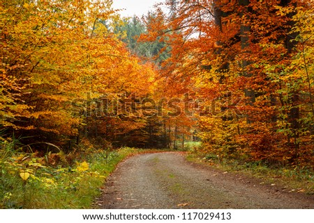 colored trees and autumn road in forrest - stock photo