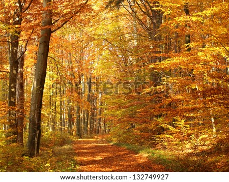 Colorful and bright autumn forest - stock photo