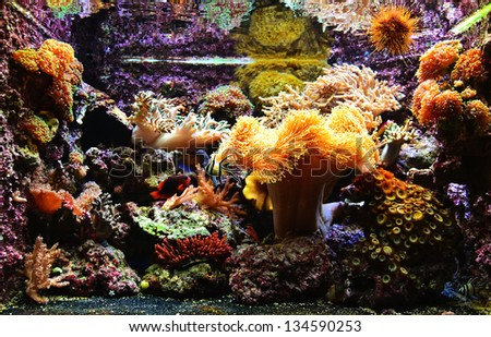 Colorful and exotic aquarium - A photo of a lovely, colorful and exotic aquarium - stock photo