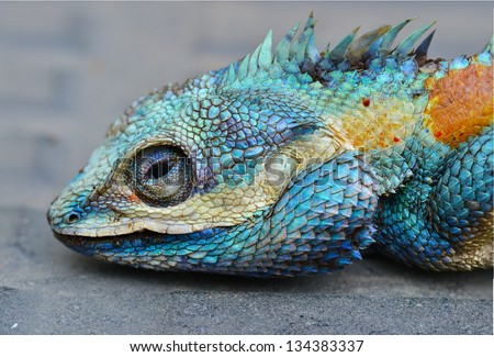 Colorful and sharp close up Dragon head. - stock photo