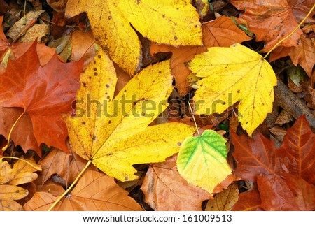 Colorful and wet fallen leaves in autumn season - stock photo